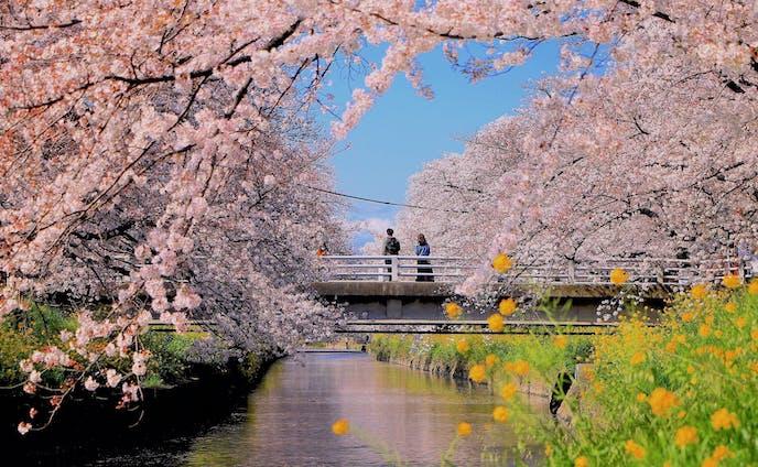 愛知銀行 創業110周年記念フォトコンテスト最優秀賞「愛する人と、春を過ごす」
