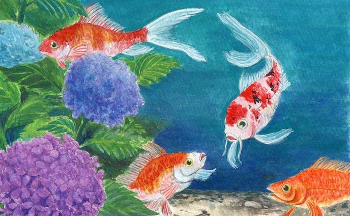 紫陽花と金魚と鯉