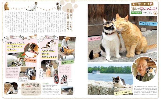 京都の看板猫 連載