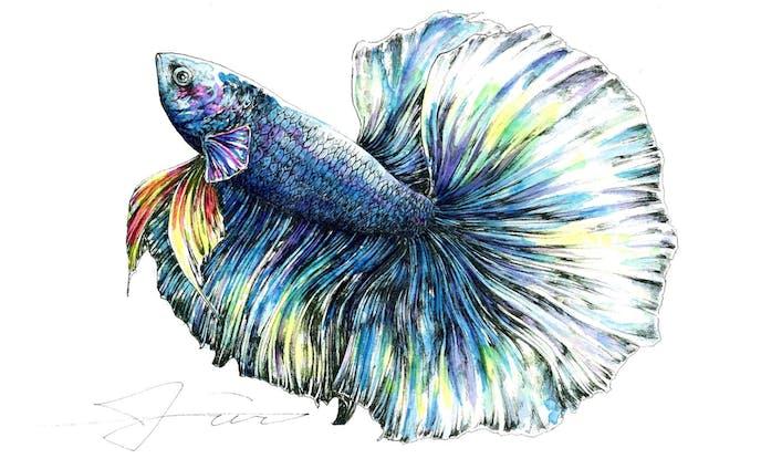 半月魚(half-moon)