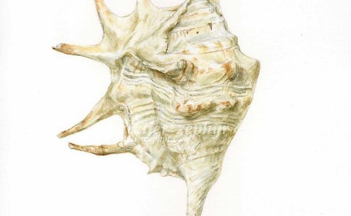 貝類の生物イラスト