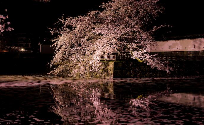 Sakura2017 - Odawara