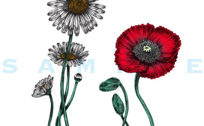植物、デジタルイラスト
