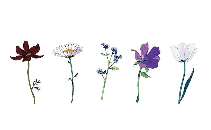 イラスト 植物