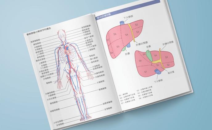 イラスト テキストの解剖図