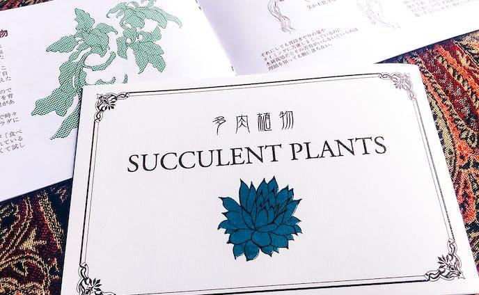 多肉植物 SUCCURENT PLANTS