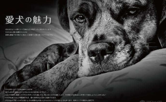 【私はこんな仕事がしたい】愛犬の魅力