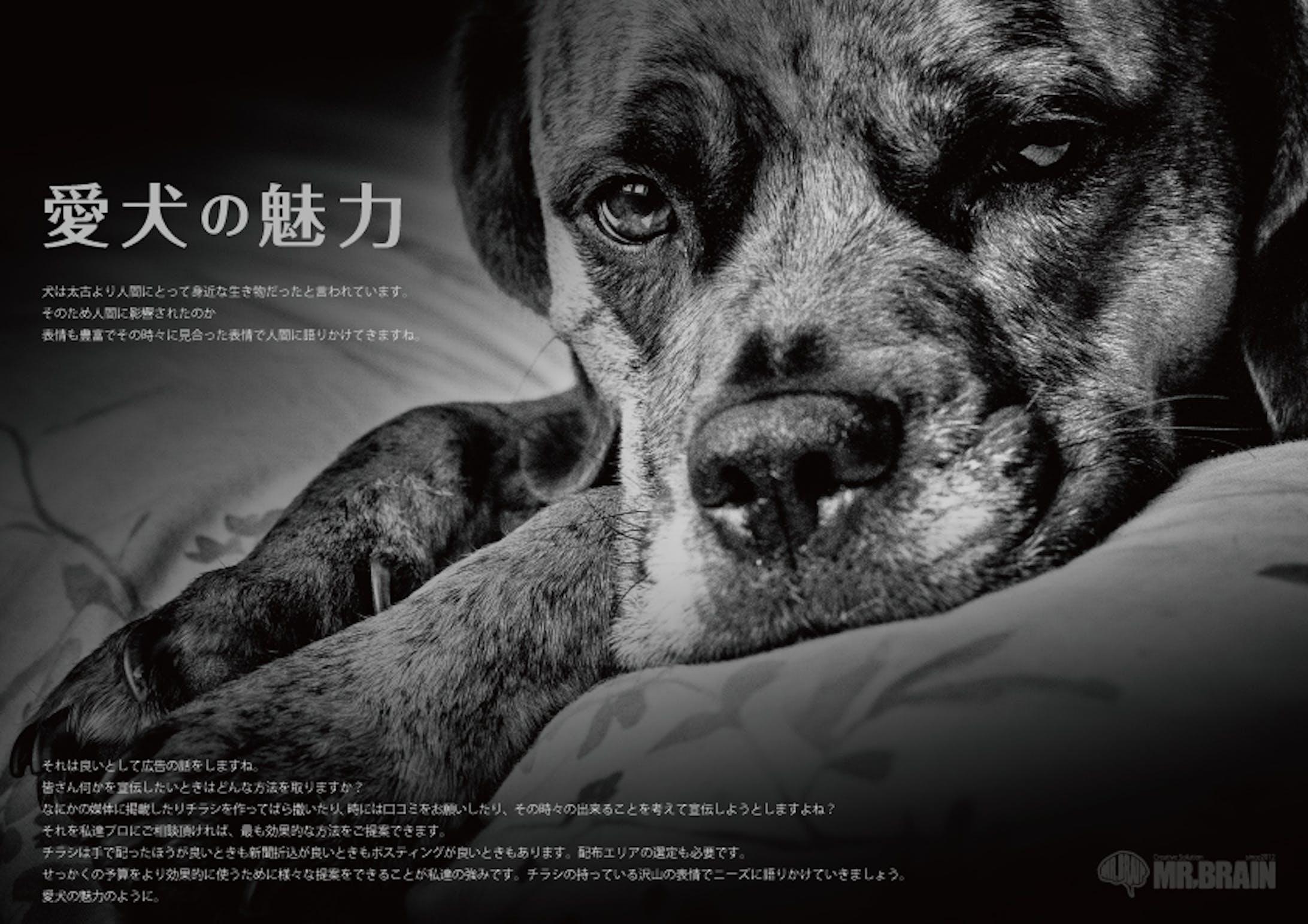 【私はこんな仕事がしたい】愛犬の魅力-1