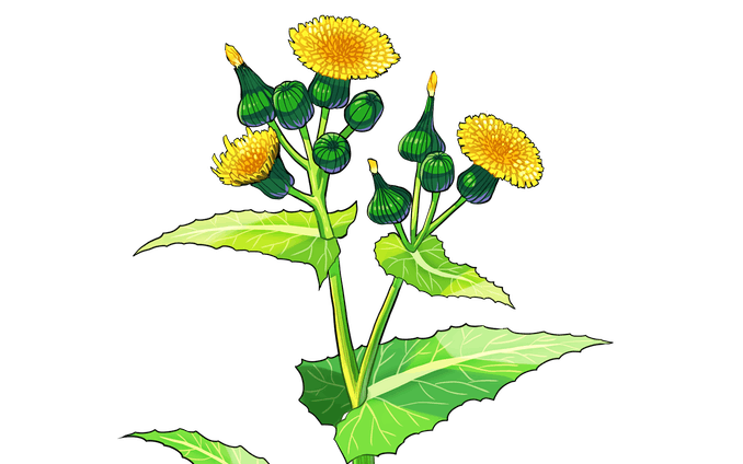 イラスト、植物