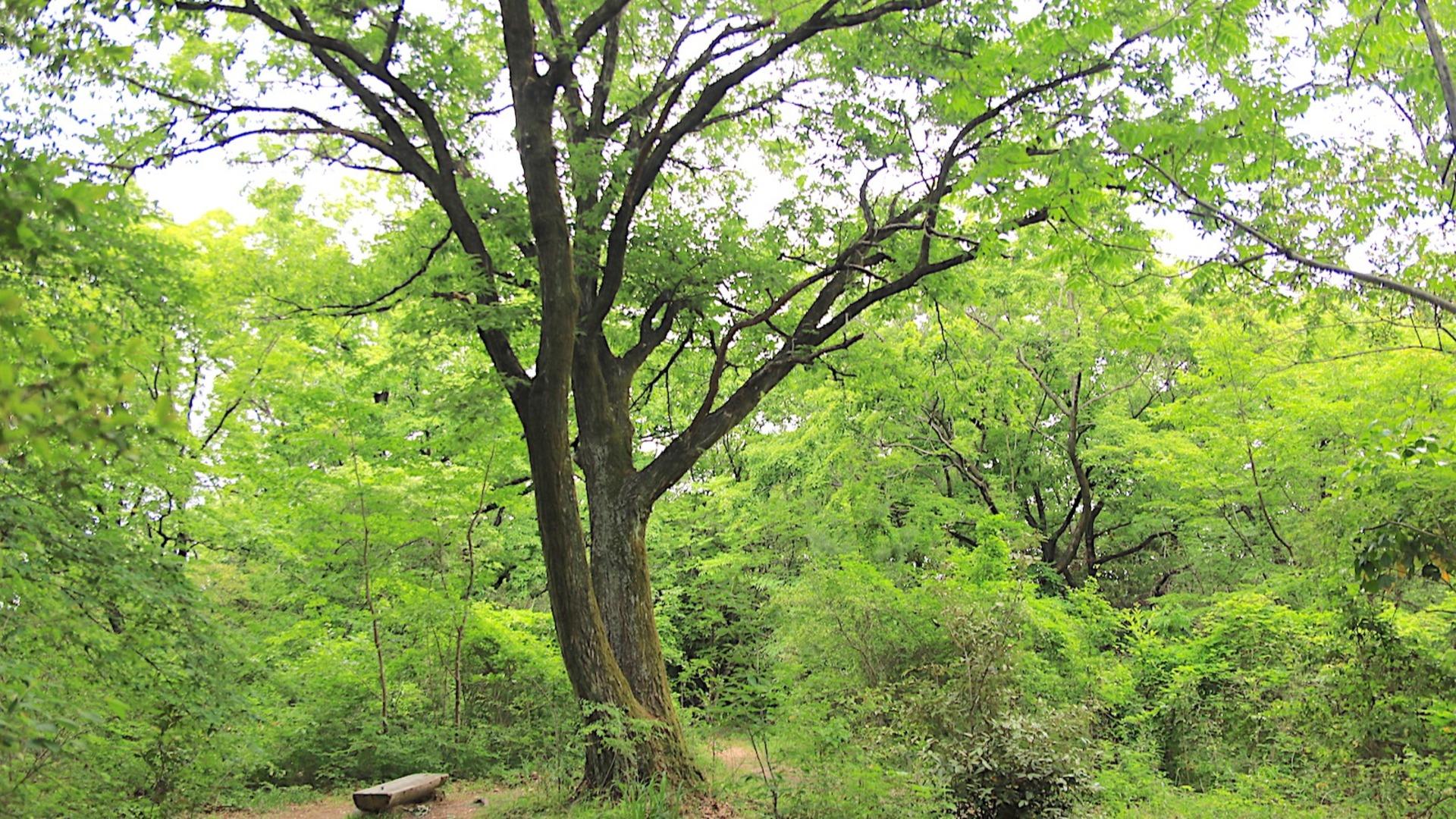 【名古屋市天白区】名古屋に残る癒しの里山「相生山緑地」を散策 - 土庄雄平   Yahoo! JAPAN クリエイターズプログラム