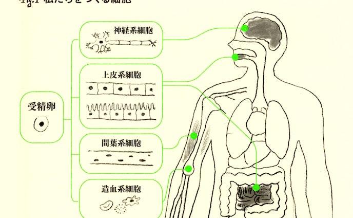 『がんと正しく戦うための遺伝子検査と精密医療』挿絵