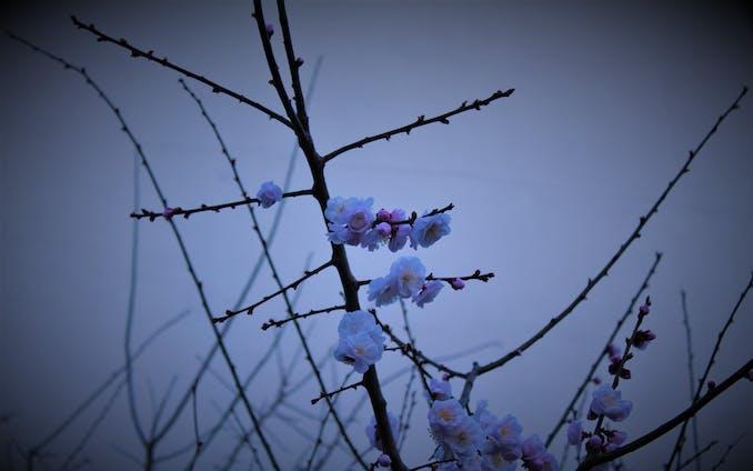 ふと思い立って春を探しに行った日
