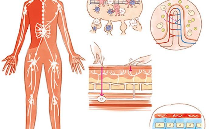日経ヘルス2020.10月号/血管、細胞イラスト