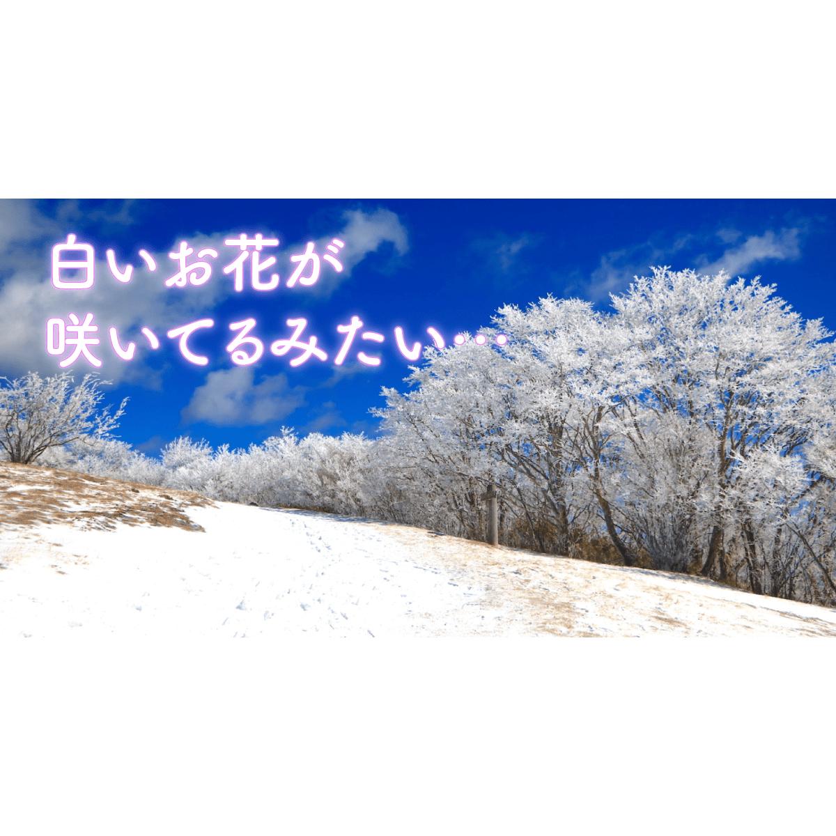 愛知・茶臼山で霧氷鑑賞|幻想的な冬に出合う旅|みんなの旅プラン【旅色】