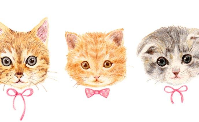3匹の猫 包装紙