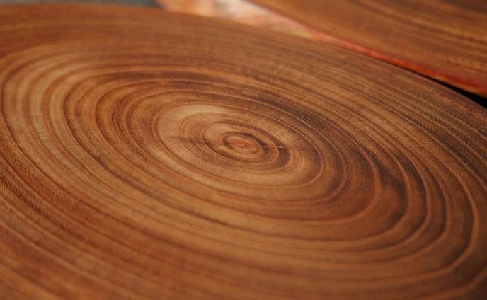 【きのわ】槐(えんじゅ)の木の小宇宙