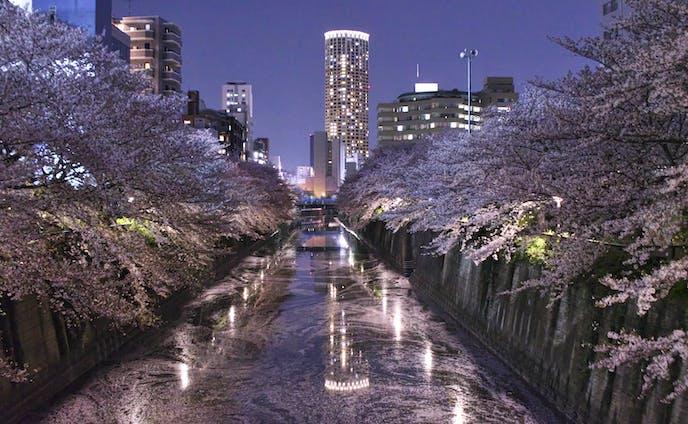夜桜の中のタワー