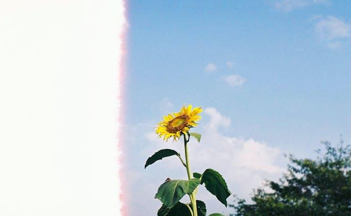 Photo(Flower)