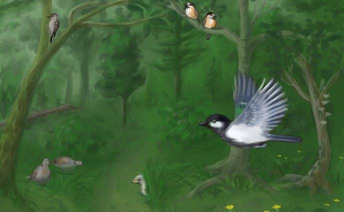いろいろな鳥のいる風景