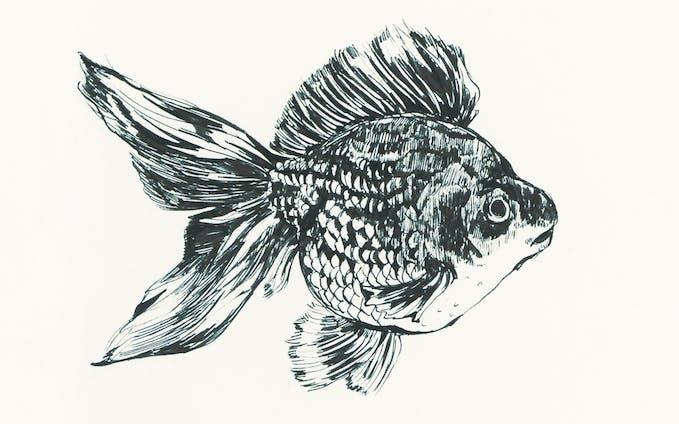 金魚_ペン画