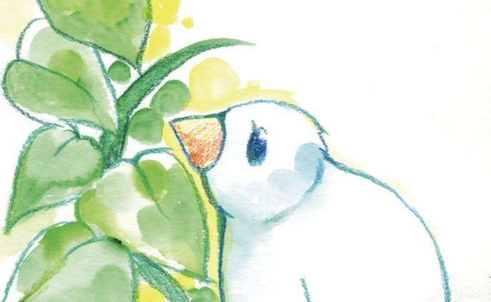pigeon1