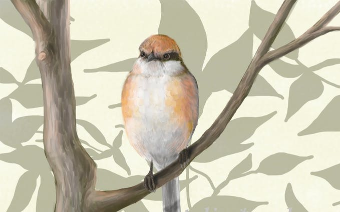 鳥のデジタルイラスト