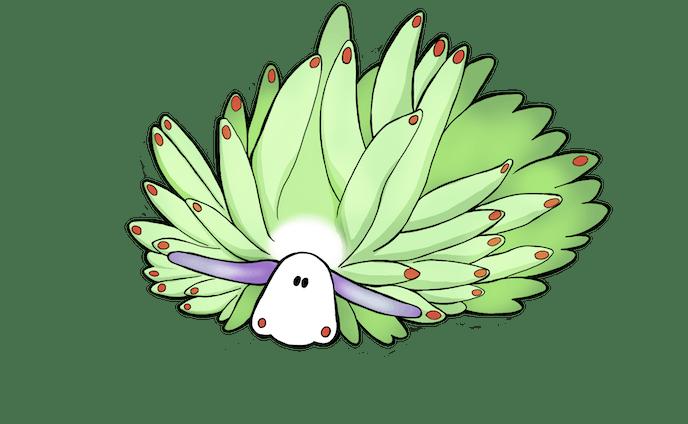 テングモウミウシ