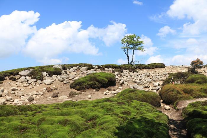 実践!私のマイクロツーリズム〜個性豊かな峰を育む、三重・滋賀県境の鈴鹿山地〜   たびこふれ